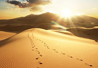 lost-in-the-desert